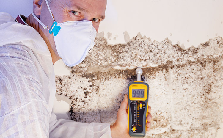 Inspect the foundation of your basement for cracks, moisture, rot and insect damage.